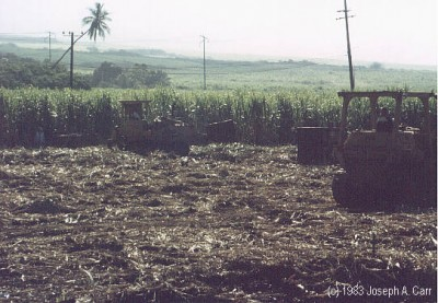 Workers in the fields cutting cane by hand in 1983