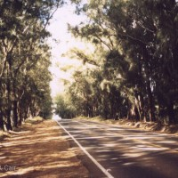 Ironwood Avenue - Kohala Mountain Road