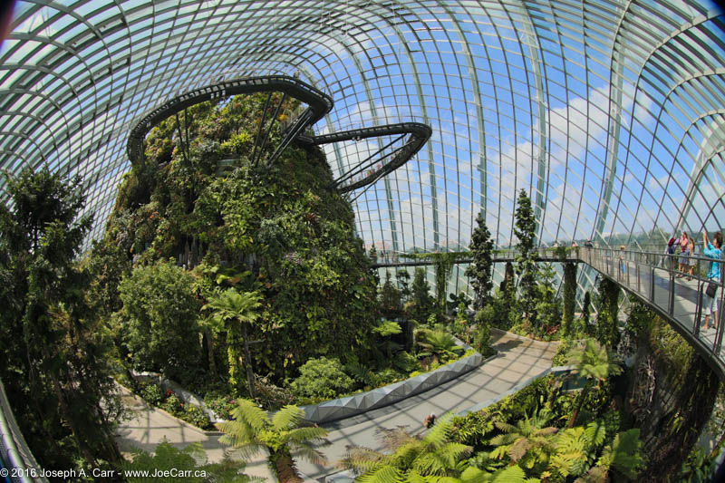 Fisheye view of the mountain, walkways and dome, The Cloud Forest, Gardens by the Bay, Singapore