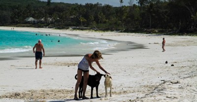 Beach dogs enjoying some attention from a tourist on Ile de Lifou, New Caledonia